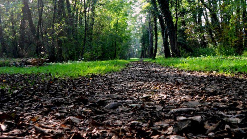 Divonne-les-Bains autunno
