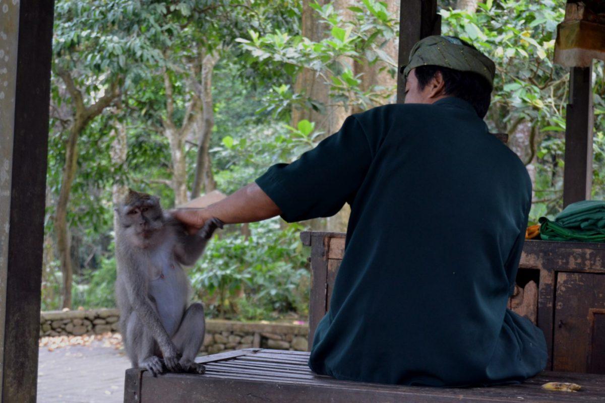 Bali_Mokey Forest