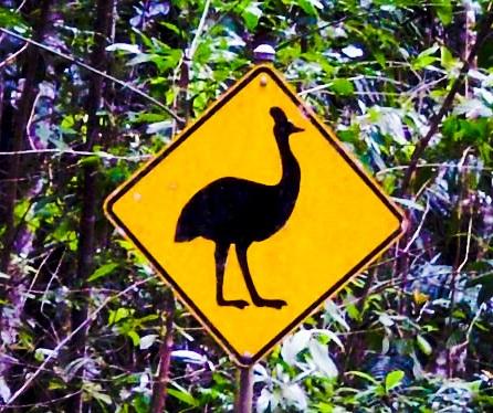 l'emu, un lontano parente dello struzzo che come quest'ultimo non sa volare. Timidissimo in natura, se cresciuto in cattività, arriva a dei livelli di curiosità ed invadenza indecenti. Ho le prove: un giorno ve le mostrerò.