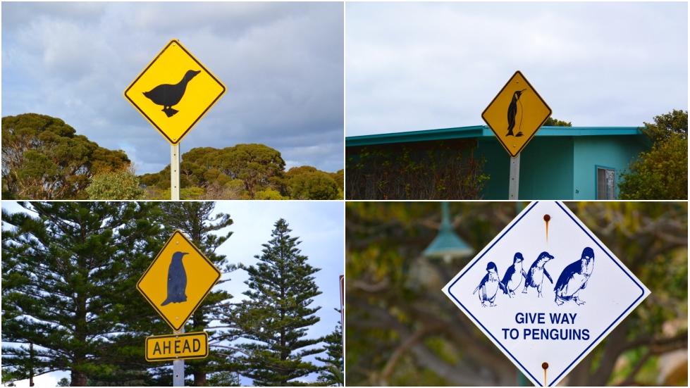 animali australiani pericolosi