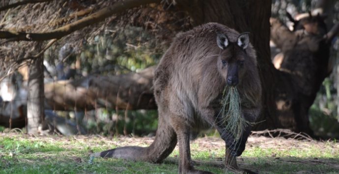 Kangaroo Island: il video