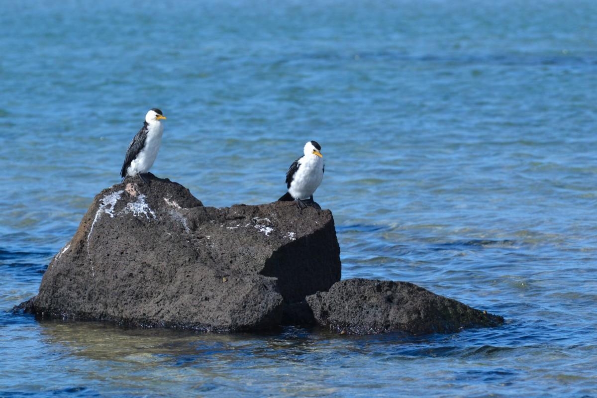 South Australia 3