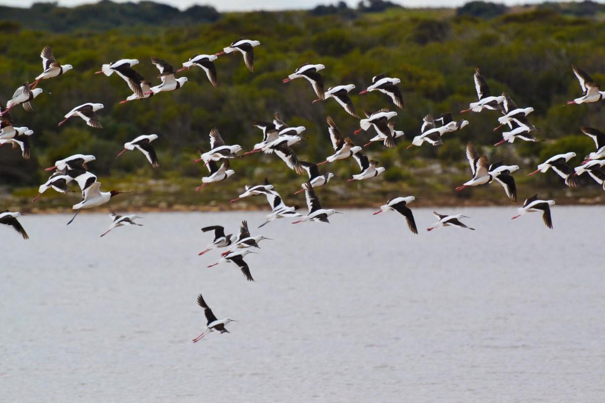 South Australia 6