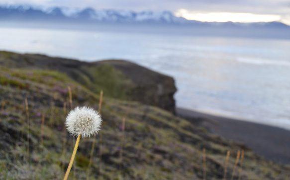 Islanda: primi appunti di strada