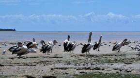 Cuising Fitzroy Island