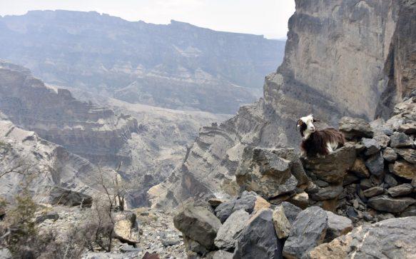 Wadi Shab: qualche consiglio pratico