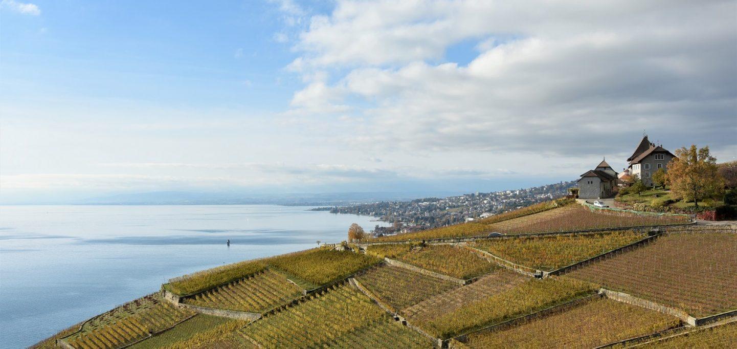 Lavaux, una terrazza sospesa nel blu