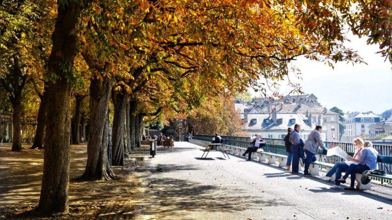 Ginevra foliage