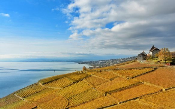Lavaux, a terrace in the blue